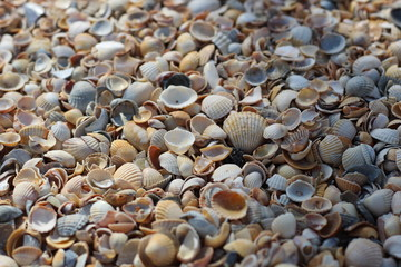 Background seashells, many different seashells lie together on the beach on the seashore