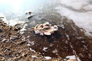 Blatt auf einer gefrorenen Pfütze