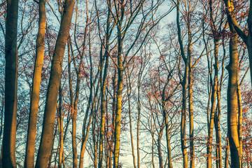 Forest in warm winter light