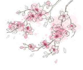 Spring sakura flowers blossom art set, hand drawn watercolor style. Cute paint cherry plant vector illustration, isolated on white background. Realistic floral bloom for japanese, chinese holiday card