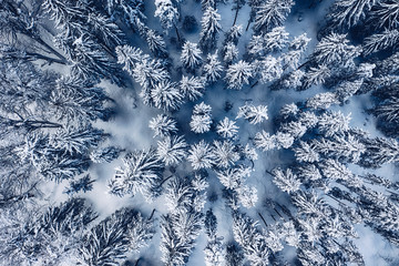 Aerial view of snow covered pine forest in the mountains