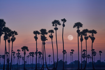 surreal sunrise skyline with full moon on sky and silhouette sugar palm trees