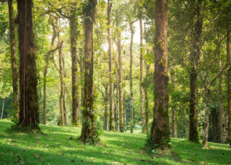 Lush green park in the tropics with sunlight shining through the moss covered trees to the grass below.