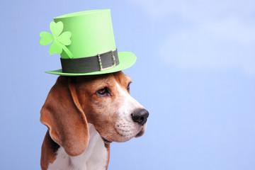Cute little dog wearing a green Leprechaun's hat
