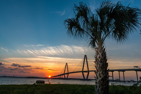 cable bridge with sunset and palmetto tree