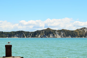 The cliff high above the beach in Tolaga Bay, New Zealand.