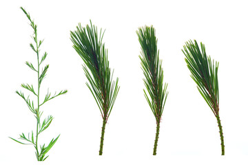 Set of grass, leaves, flowers, plants, and stems. Collection of green leaves isolated on white. High definition close up shooting.
