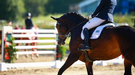 Dressage horse in a close-up with rider in the tournament, initiating a turn in the trot..
