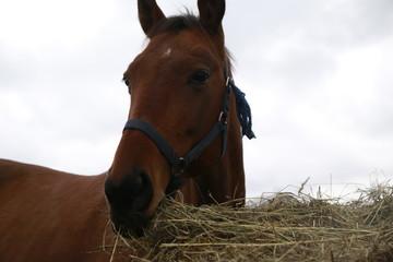 Big horse near a big haystack in an autumn day