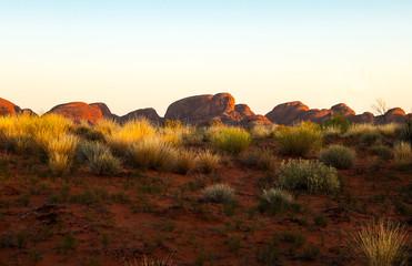 Garden Poster Brown Australia, natural and urban landscapes