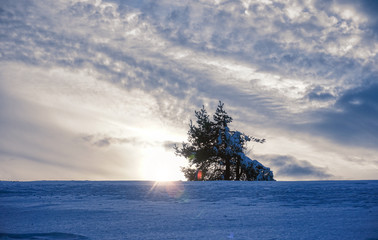 Winter in mountain with snow and tree