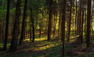 Lovely Summer Forest