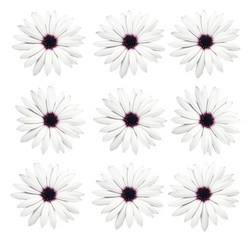 Spring flowers, isolated background