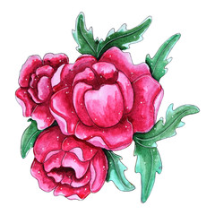 Watercolor hand painted pink peony flowers.
