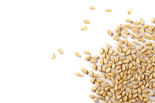 Wheat pile isolated on white background, top view