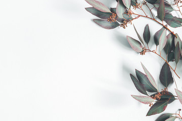Eucalyptus leaves on pastel gray background. Pattern made of eualyptus branches. Flat lay, top view, copy space