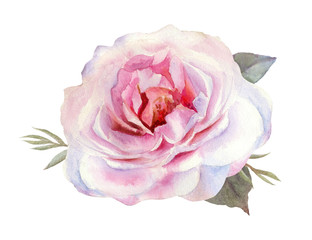 Beautiful tender pink roses for wedding invitations, greeting cards, photos and more. Hand drawn watercolor