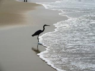Die Küste und die Strände von Goa in Südinien