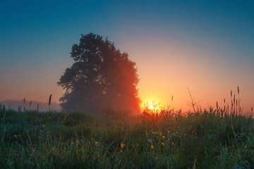 Spring morning landscape at sunrise. Rural scene at dawn. Trees in meadow with sun on horizon.
