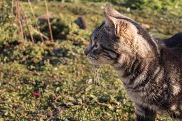 close up photo of cat in the garden looking to the left