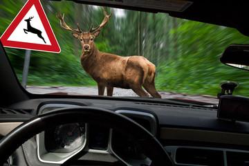 Fotobehang Ree Vorsicht Wildwechsel - Hirsch überquert Waldweg