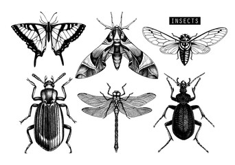 Papiers peints Papillons dans Grunge Vector collection of hand drawn insects illustrations. Black butterflies, cicada, beetle, bug, dragonfly drawing. Entomological sketch set.