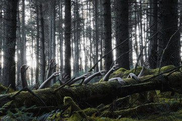 A horror concept of a spooky winter forest with zombie hands coming out of a tree trunk, with a cold muted edit.