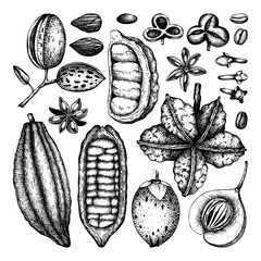 Vector collection of tonic and spicy plants. Hand drawn spices illustrations set. Vintage aromatic elements. Sketched flowers, leaves, seeds, fruits, nuts, beans.