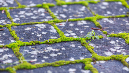 brick paving stones with moss