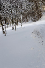 Trees in a Parc in Snow in Winter