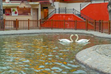 Heart shape of white swans in Kugulu Park, Ankara, Turkey