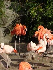 Hagenbecks Tierpark, Hamburg, Oktober 2018