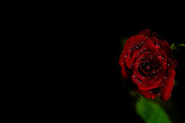 Beautiful red rose on a black background. Bouquet of beautiful roses on valentine's day, birthday, anniversary.