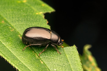 Bettle with close up view.