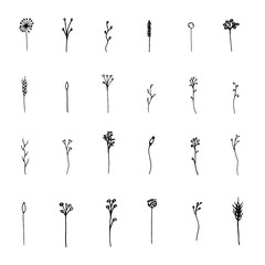 Isolated botanical vector set. Hand drawn lineart and solid herbs illustrations collection, black on white background