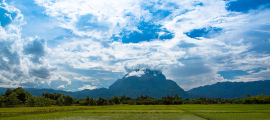 Rice fields and Chiang Dao mountains  in Chiang Mai Thailand