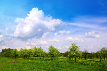 Green field and fruits trees. Sring nature background.