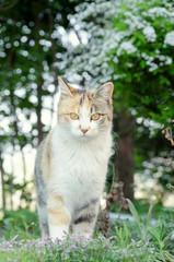 森の野良猫