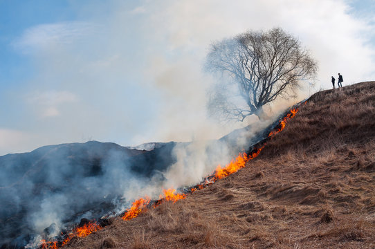 Burning dry grass in spring in the fields of Russia.
