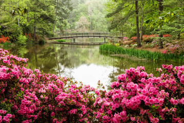 Fotobehang Azalea Azalea Flower Garden with Lake and a Footbridge