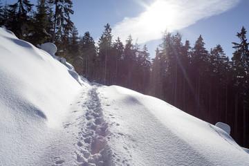 śnieg - widok pod słońce - fototapety na wymiar