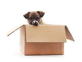 Puppy in the box.