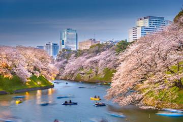 Fotomurales - Tokyo, Japan at Chidorigafuchi Imperial Palace moat