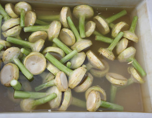 Many stems of artichokes in cold water ready to be ccucinati and