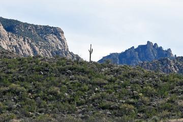 Single big saguaro cactus in Catalina State Park outside of Tucson, Arizona