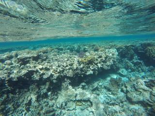 Underwater survey, red sea, Underwater light