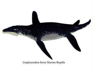 Liopleurodon Reptile Side Profile with Font - Liopleurodon was a large carnivorous marine reptile that lived in the seas off England and France during the Jurassic Period.