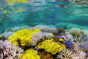 Fluorescing coral reef
