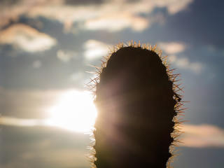 Close Up Photo of a Cactus in Silhouette at Sunrise - with Spiky, Glowing Needles and a Warm, Cloudy Sky in the Background