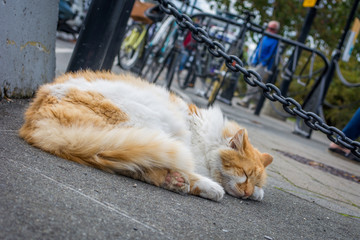 Angled Photo of an Orange and White Cat Sleeping on the City Streets - with Pedestrians and Bicycles in the Background